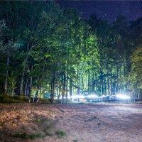 Дискотека в лесу :: kot raz