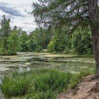 Лесное озеро :: Александр Шмалёв