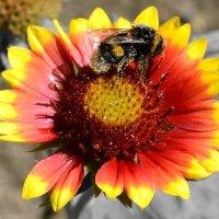 Пчела на цветке :: Марина Романова
