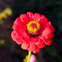 Цветок на закате :: Марина Романова