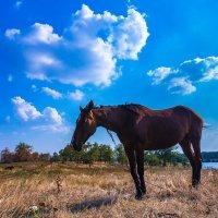 Конь у реки :: Artem Zelenyuk