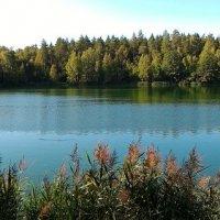 Лесное озеро :: Станислав Стариков