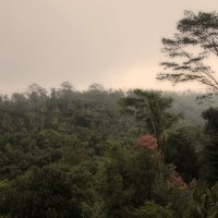 джунгли Бали :: Александр