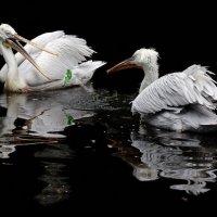 игрушки русских пеликанов :: Михаил Бибичков
