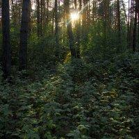 Загадочный лес :: Наталья