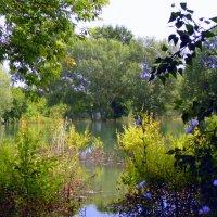 На озере. :: Мила Бовкун