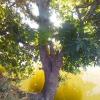 """""""дерево над водой"""" :: Райская птица Бородина"""