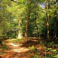 В солнечном лесу :: Alexander Andronik