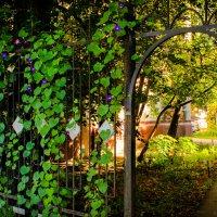 Окно в лето :: Михаил Аленин