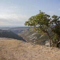 В горах Бахчисарая :: Alex Mitus