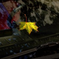Осенний лист, упавший на стекло , напомнил : время Осени  - пришло! :: Александр Ковальчук