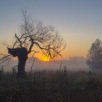 Два дерева :: Сергей Корнев