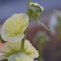 цветок :: Михаил Радин
