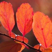 Яркая осень :: Swetlana V