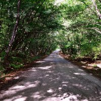 Дорога в лесу :: Виктор Шандыбин