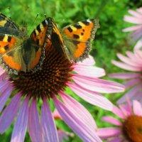 Цветок из бабочек. :: Valentina