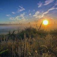 Солнце и туман :: Юрий Стародубцев