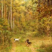 Осень в лесу. :: Маргарита ( Марта ) Дрожжина