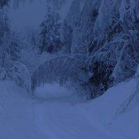 Дорога в зимнюю сказку :: Ирина Останина
