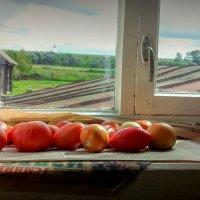 Урожай на окне :: Денис Антонов