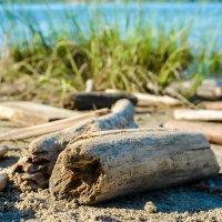 брёвна на берегу :: Света Кондрашова