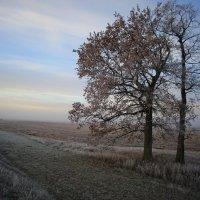 Туманный расвет :: Константин Pasko