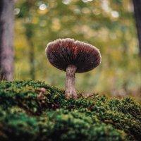 очередной гриб :: Эдуард Куклин