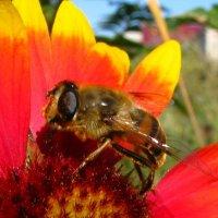 Пчеломагия. Никуда от пчел... (проба фотографировать  с фиксацией фотика) Пока без нового фотоаппа :: Yulia Deimos