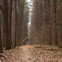 в лесу :: Людмила Деревянко