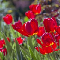 любимцы весны :: gribushko грибушко Николай
