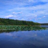 Кронштадтское водохранилище. :: Татьяна ❧