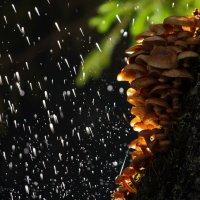В волшебном лесу :: Юлия Игнатьевская