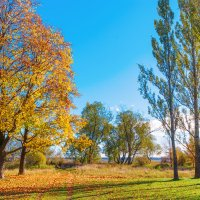На берегу озера Разлив 6 :: Виталий