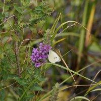 Осенняя бабочка :: MPS