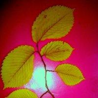 Ветка из гербария :: Лебедев Виктгр
