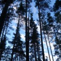 Однажды в лесу :: Ольга Мореходова