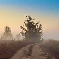 осень.утро.туман.дорога. :: юрий иванов