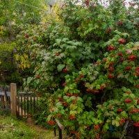В огороде, тропка :: Валерий Симонов