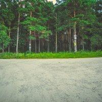 Лес :: Света Кондрашова