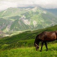 Конь в горах :: Анзор Агамирзоев
