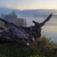 На берегу туманной реки :: Сергей Корнев