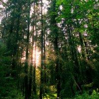 Всё еще зеленый, но уже осенний лес :: Александра Кускова