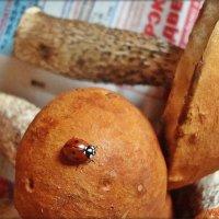 Прилетела из леса вместе с грибами :: Лидия (naum.lidiya)