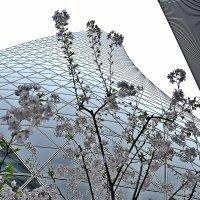 Архитектура в Нагоя :: Swetlana V