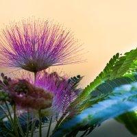 Цветок :: Serge N