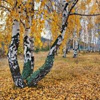 Осень пришла :: Валерий Толмачев