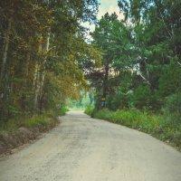 лесные дороги для машин :: Света Кондрашова