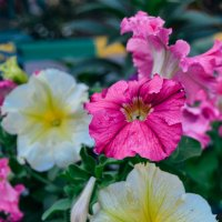 разных цветов и размеров :: Света Кондрашова