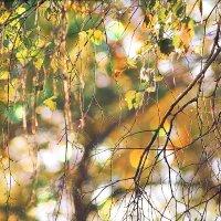 Осенний этюд :: Екатерина Торганская