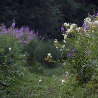 Луговые цветы :: Daniela